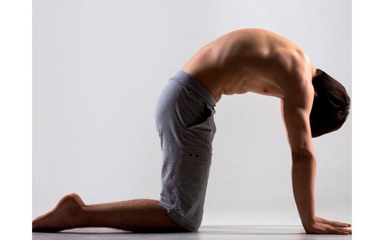 tư thế yoga mèo bò
