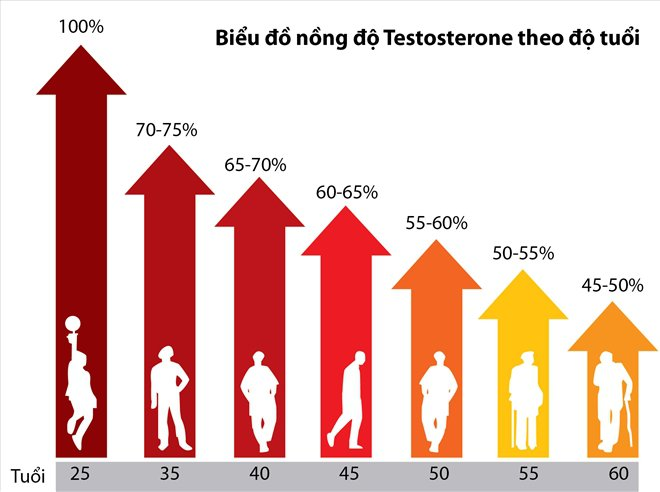 biểu đồ nồng độ testoterone theo tuổi