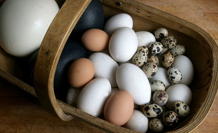 trứng gà