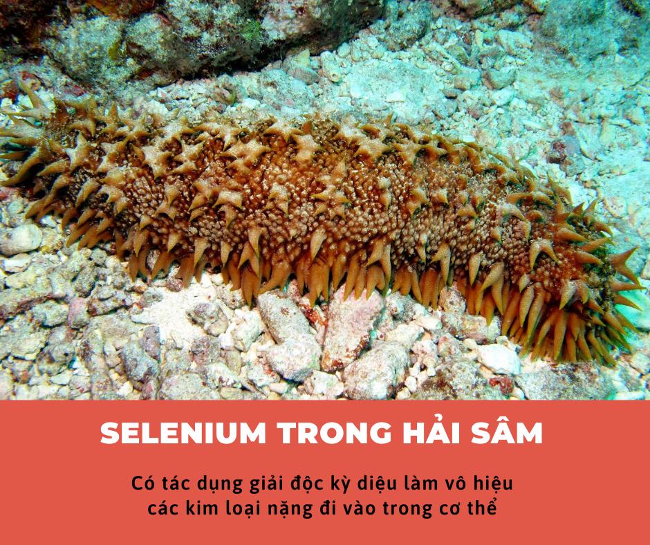 Selenium trong Hải sâm có tác dụng giải độc kỳ diệu làm vô hiệu các kim loại nặng đi vào trong cơ thể